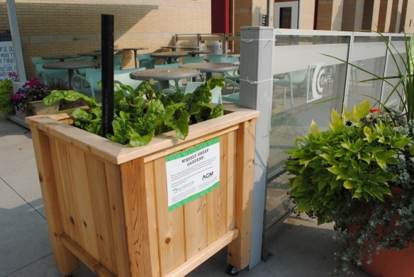 Wheely Great Veggie Gardens, a joint project by  AGM and Ecosource, at C Cafe, Mississauga Celebration Square